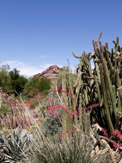 cactus, plants, red, rock, hill, landscape, nature