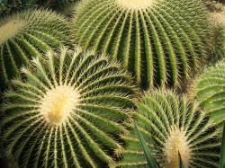 cactus, pointed, group, plant, nature, thorns