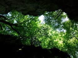 canopy, trees, green, foliage, looking up, rock