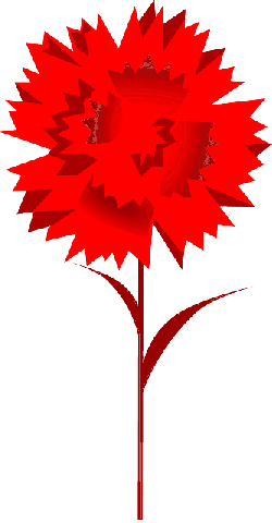 carnation, flower, red, plant