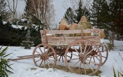 carriage, rides, trees, outside, snow, winter