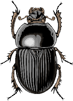 cartoon, bugs, bug, insect, beetle, insects, scarab