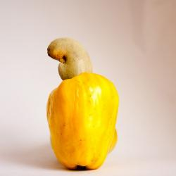 cashew, fruit, yellow