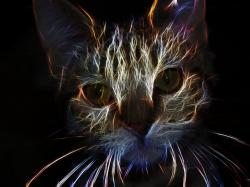 cat, animal, feline, head, portrait, fractal, art