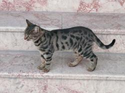 cat, animal, mackerel, cute, sweet, gradually, stairs