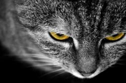 cat, animals, macro, detail, eye, eyes, yellow