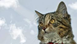 cat, feline, animals, eyes, kitten, sky