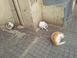 cat, pets, animal, cat wash, istanbul