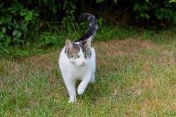 cat, pets, domestic cat, spotted, nature, psychiatric