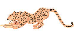 cat, water, dish, drinking, cheetah, art, animal, spots