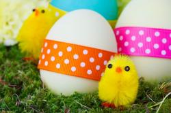 celebration, chick, chicken, color, colorful, cute