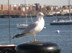 city, stump, sitting, harbor, buoys, stop, yachts, bird