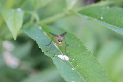 close-up, deer flie, flies, horsefly, plant, sitting