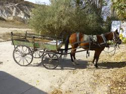 coach, horse drawn carriage, horse, wagon, dare