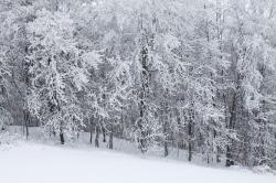 cold, covered, forest, frost, ice, landscape, nature