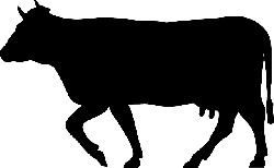 cow, cattle, beef, animal, mammal