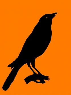 crow, bird, animal, black, logo, shape, outline
