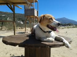 dog, beach, animal, pet, mutt, animals