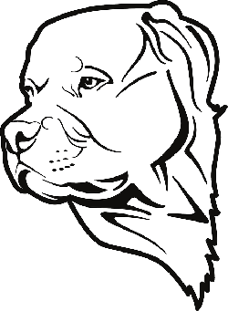dog, bull, pet, household, animal, pit, breed