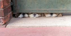 dogs, curious, montrouge, france 2012