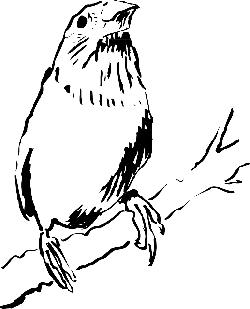 drawing, bird, branch, animal, staring, feathers