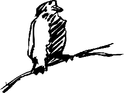 drawing, bird, wings, animal, feathers, perched