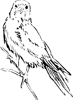 drawing, bird, wings, animal, staring, feathers