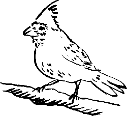 drawing, bird, wings, art, animal, feathers, perched