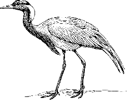drawing, bird, wings, crane, tail, feathers, species
