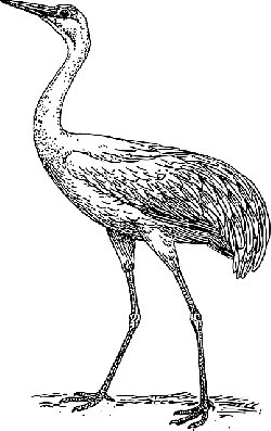 drawing, bird, wings, long, crane, neck, legs, feathers