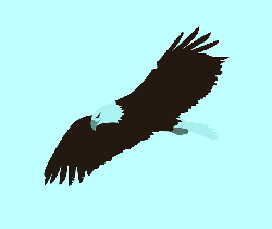 drawing, cartoon, eagle, bird, fly, flying, free, bald