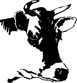 drawing, cow