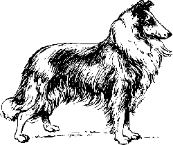 drawing, dog, pet, collie, fur, breed