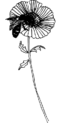 drawing, flower, bee, plant, insect, pollen