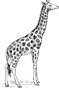 drawing, giraffe, long, neck, animal, tall, spots, spot