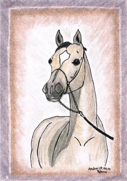 drawing, painting, horse, arabs, pony, whole blood