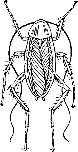 drawing, sketch, insect, legs, antennae, cockroach