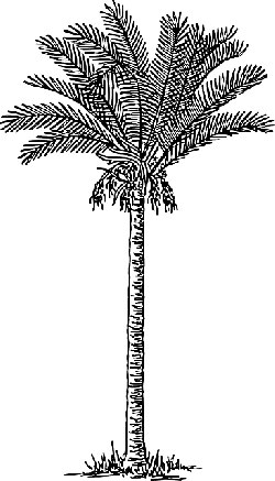 drawing, sketch, palm, tree, cartoon, trees, plant