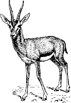 drawing, standing, animal, mammal, gazelle, antlers