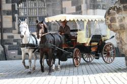 dresden, frauenkirche, horses, carriage, horse drawn