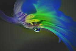 dripping, water, flower, blossom, nature