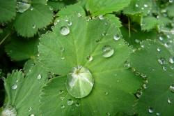 drop of water, green leaf, clear, wet, plant