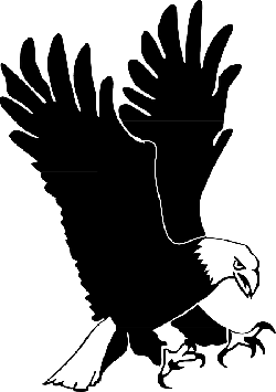eagle, bird, wings, landing, hunting, feathers