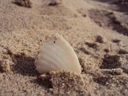 egypt, taba, sea, water, red sea, sand, shell