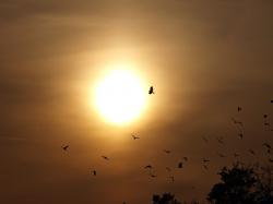 evening sky, birds, sun, sunset, nature, twilight
