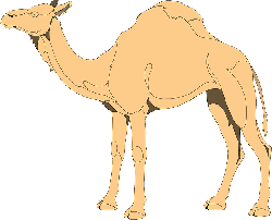 eyes, sand, one, closed, camel, long, neck, desert