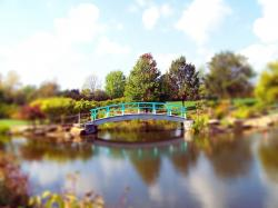 fall, autumn, leaves, pond, bridge, park, trees, clouds
