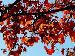 fall foliage, contrast, color, toll, beautiful