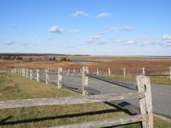 fall, ocean, truro, cape cod, fence