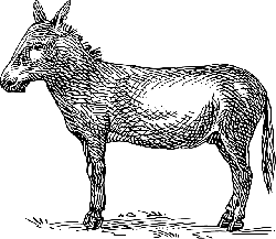 farm, donkey, animal, mammal, donkeys, grass, ground